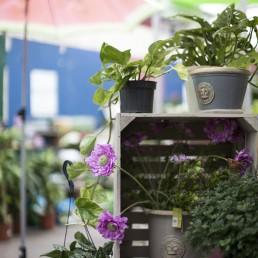 Plant loan